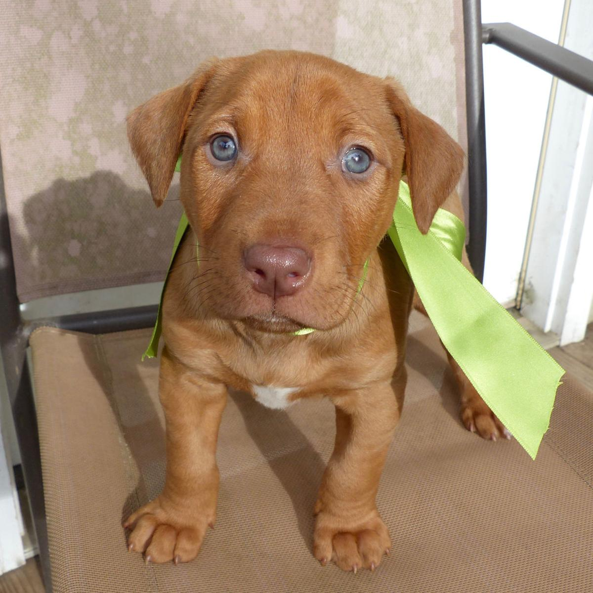 Baton Rouge dogs available for adoption on Jan 19 2017