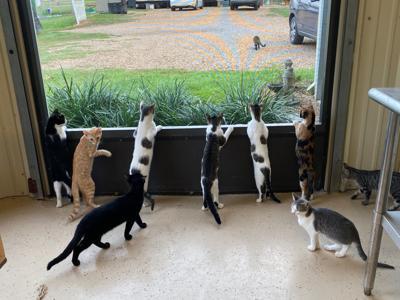 window kittens 1.jpg