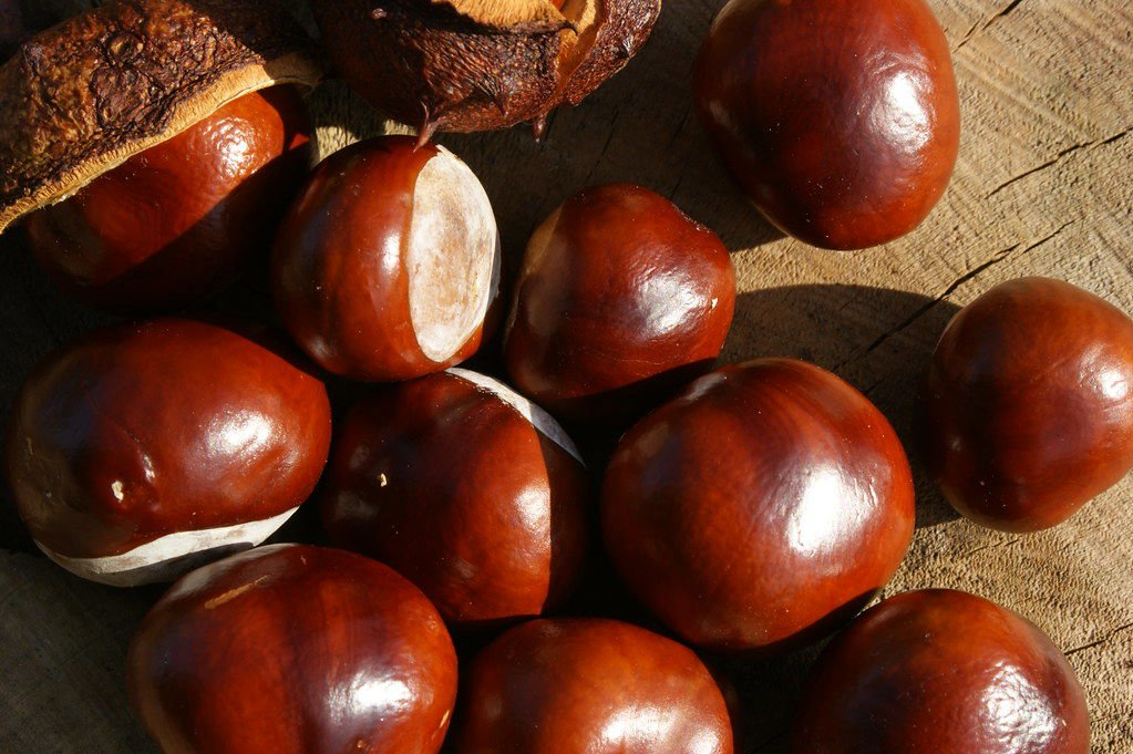 Red buckeye seeds are thought to resemble deer eyes, hence.jpg