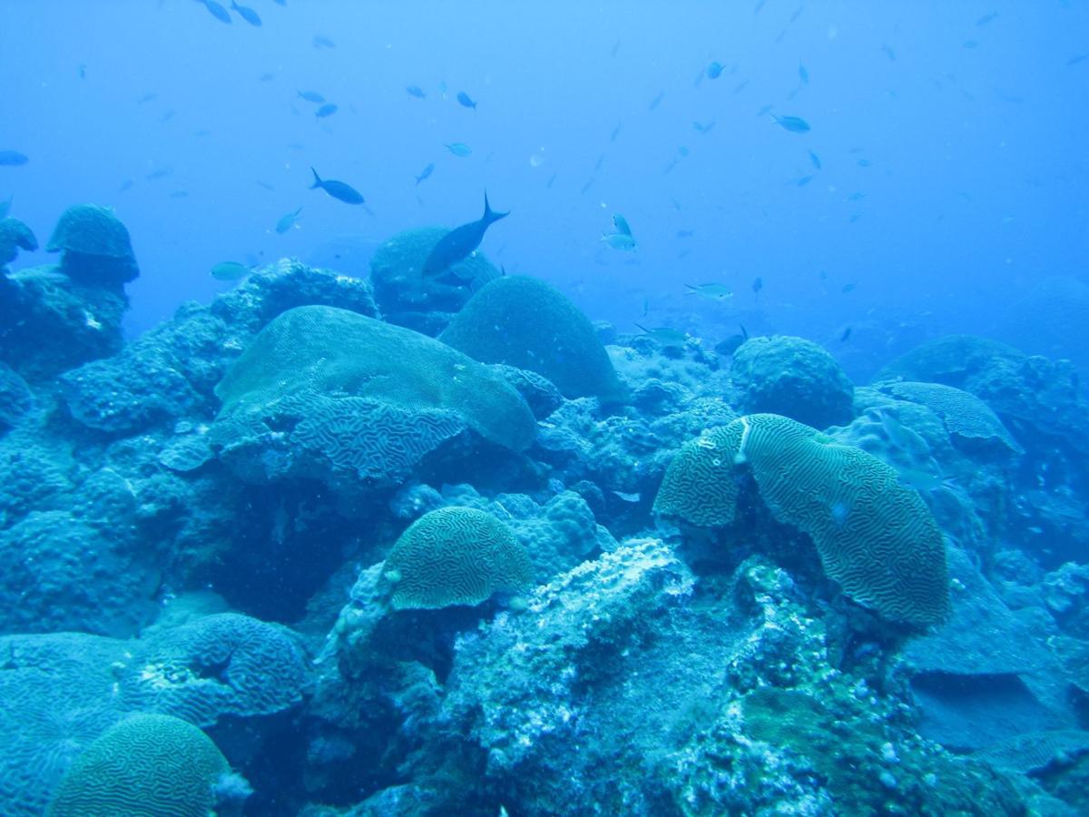Flower Garden reef