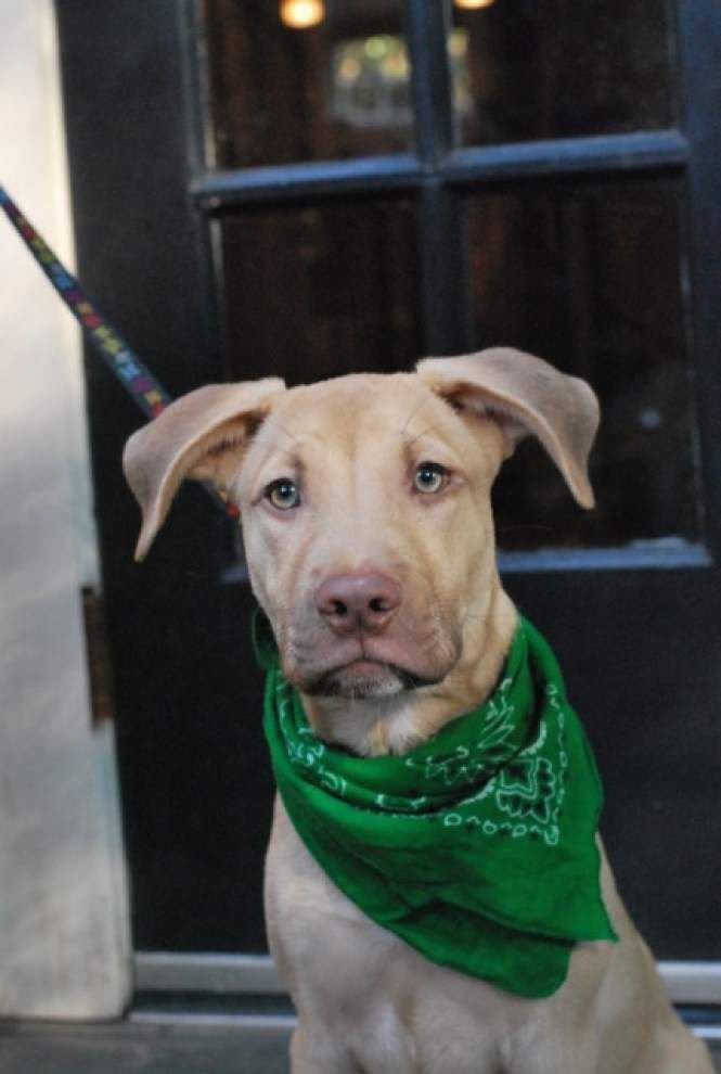 Southside pets available for Sept. 18, 2014 _lowres