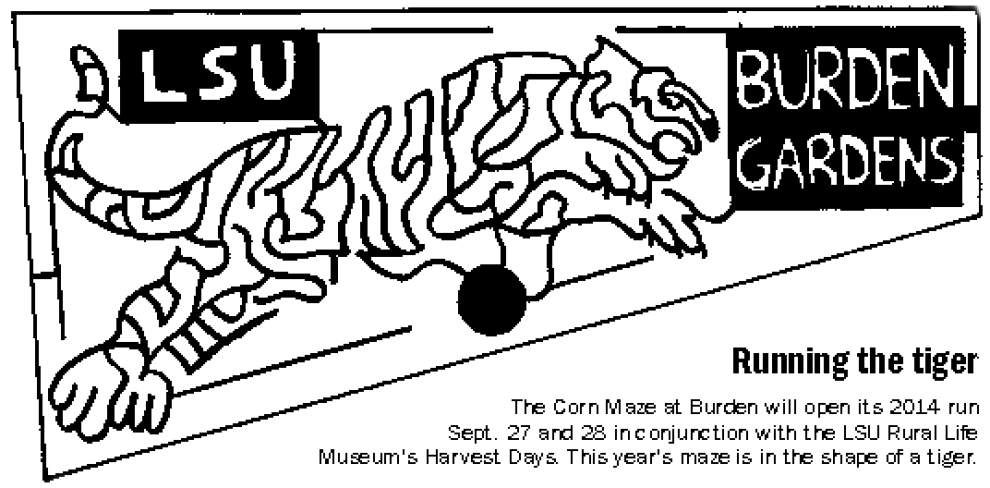 Participants can 'run the tiger' corn maze at museum's Harvest Days _lowres