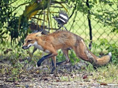 BR.foxandfoe.071318_HS_005
