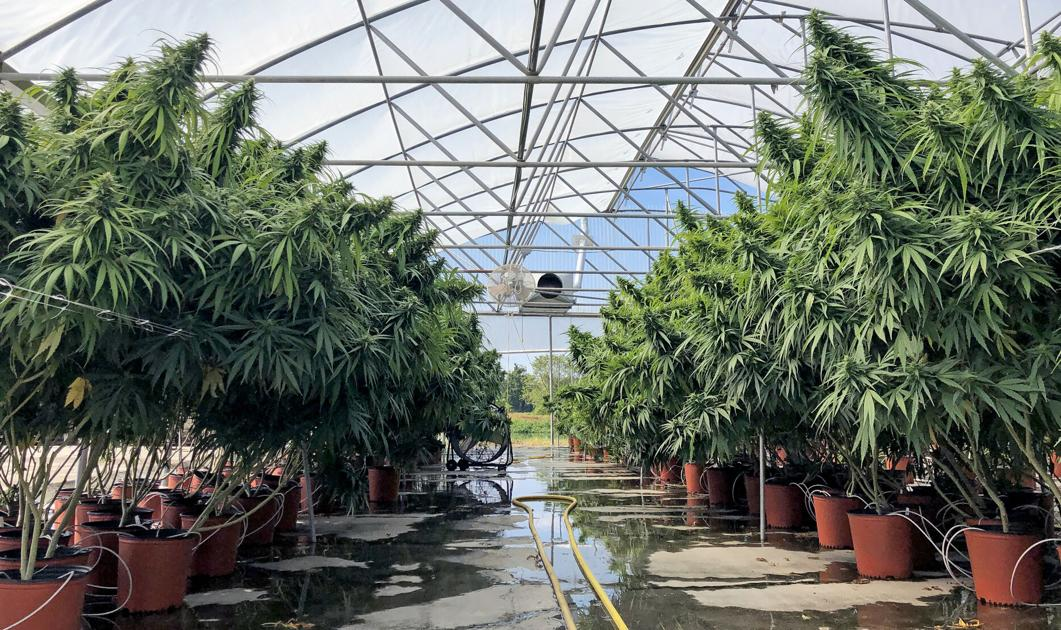 Louisiana opens application period for 2021 hemp licenses