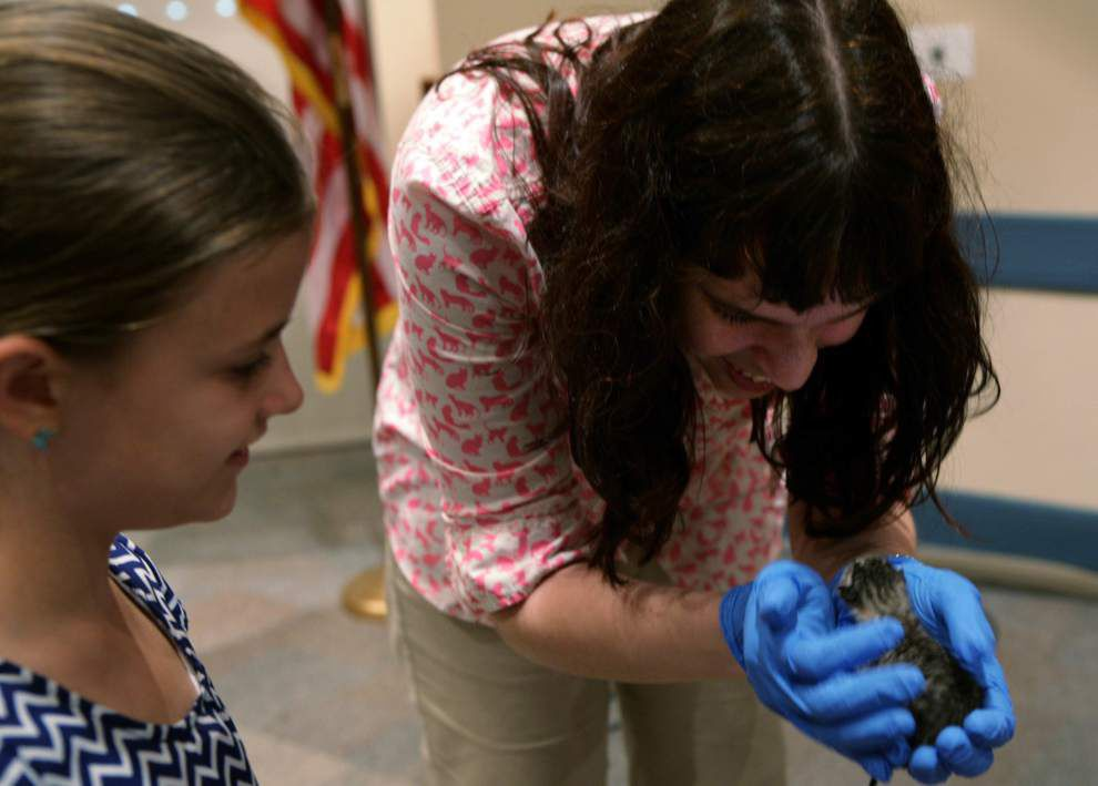 Children learn about caring for orphaned kittens _lowres