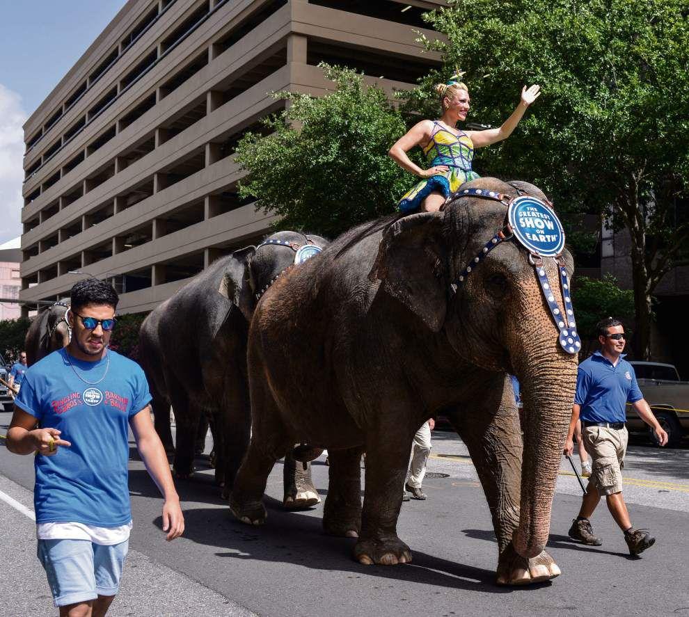 Photos: Circus parade _lowres
