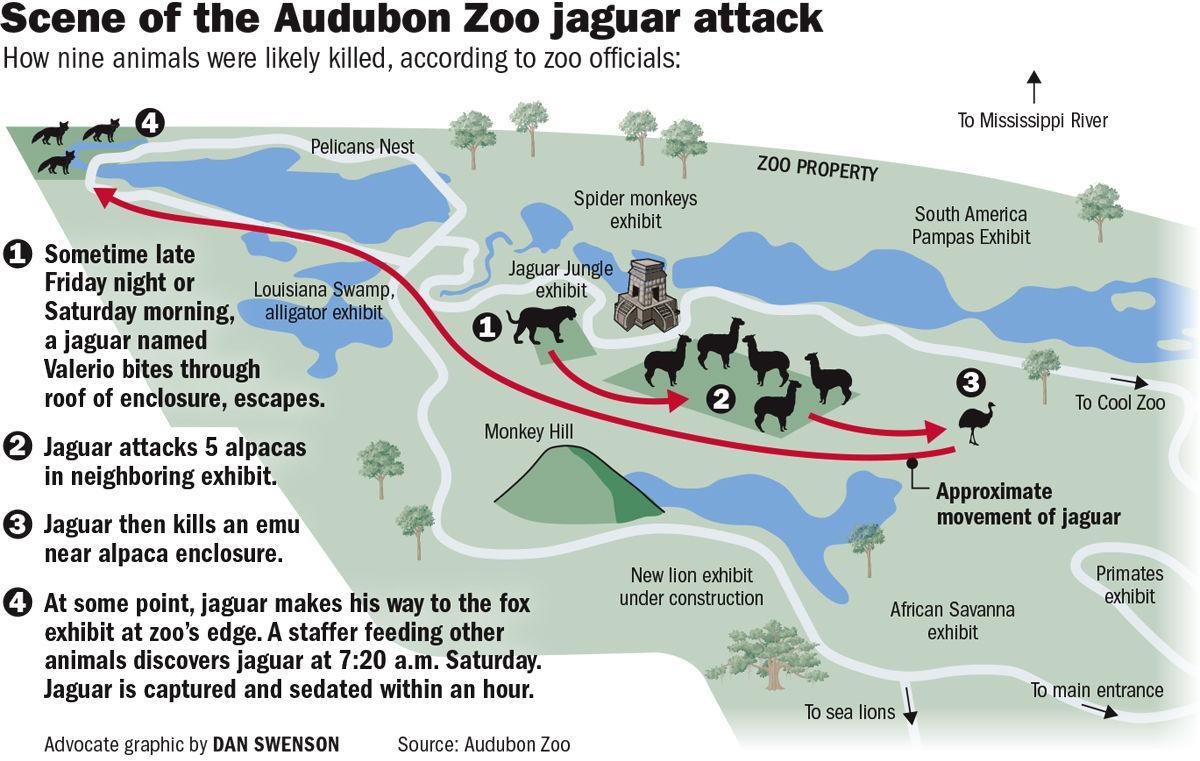 071818 Zoo Jaguar attack diagram.jpg