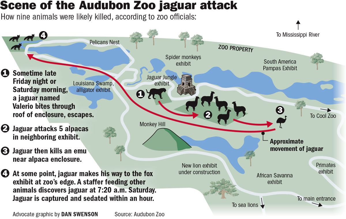 071818 Zoo Jaguar Attack Diagram
