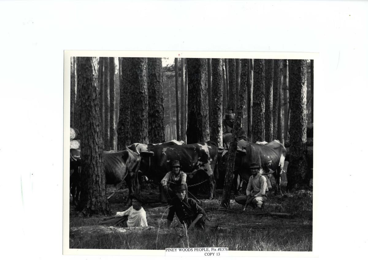 Piney Woods B.101620.jpg