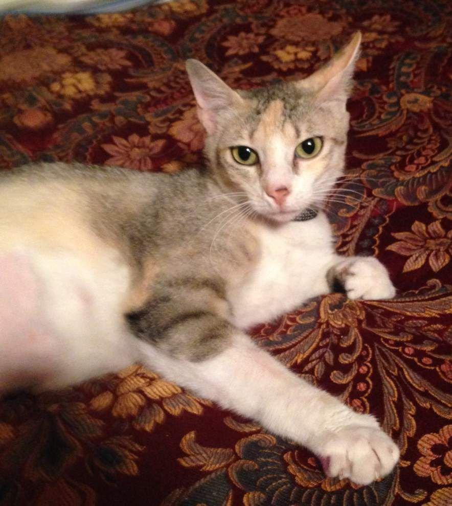 Southeast cats available for March 19, 2015 _lowres