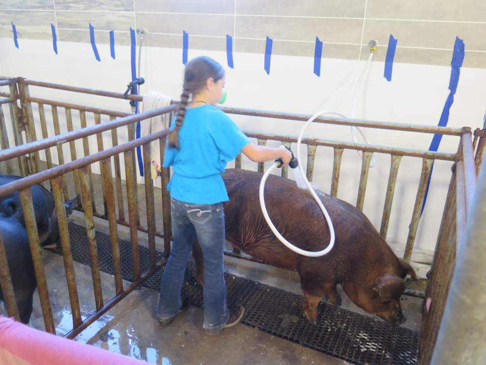 Livestock shows a family tradition for St. Amant senior _lowres