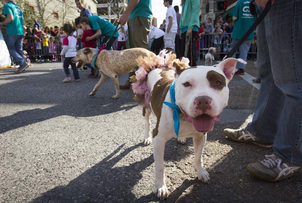 Mardi Gras 'pawty' time delights Lafayette crowd as owners put pets on parade _lowres