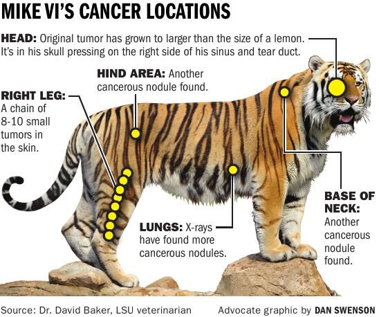 Graphic: Mike VI's Cancer Locations