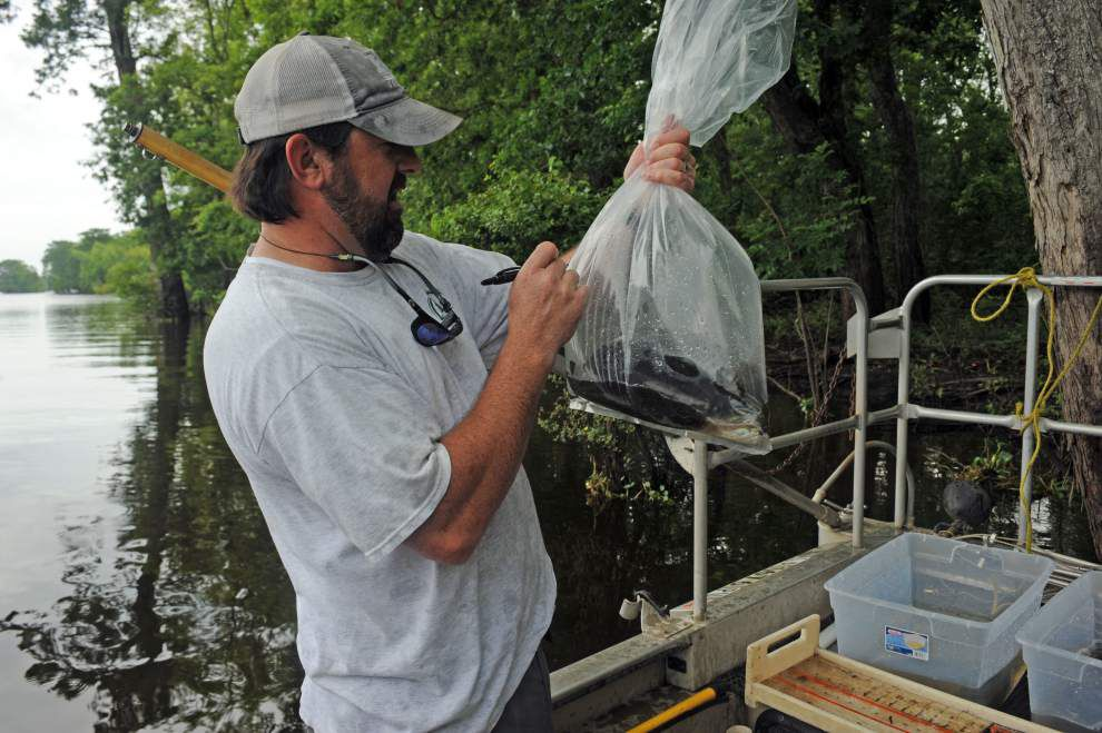 State environmental workers back out on Louisiana waters, catching fish for mercury testing _lowres