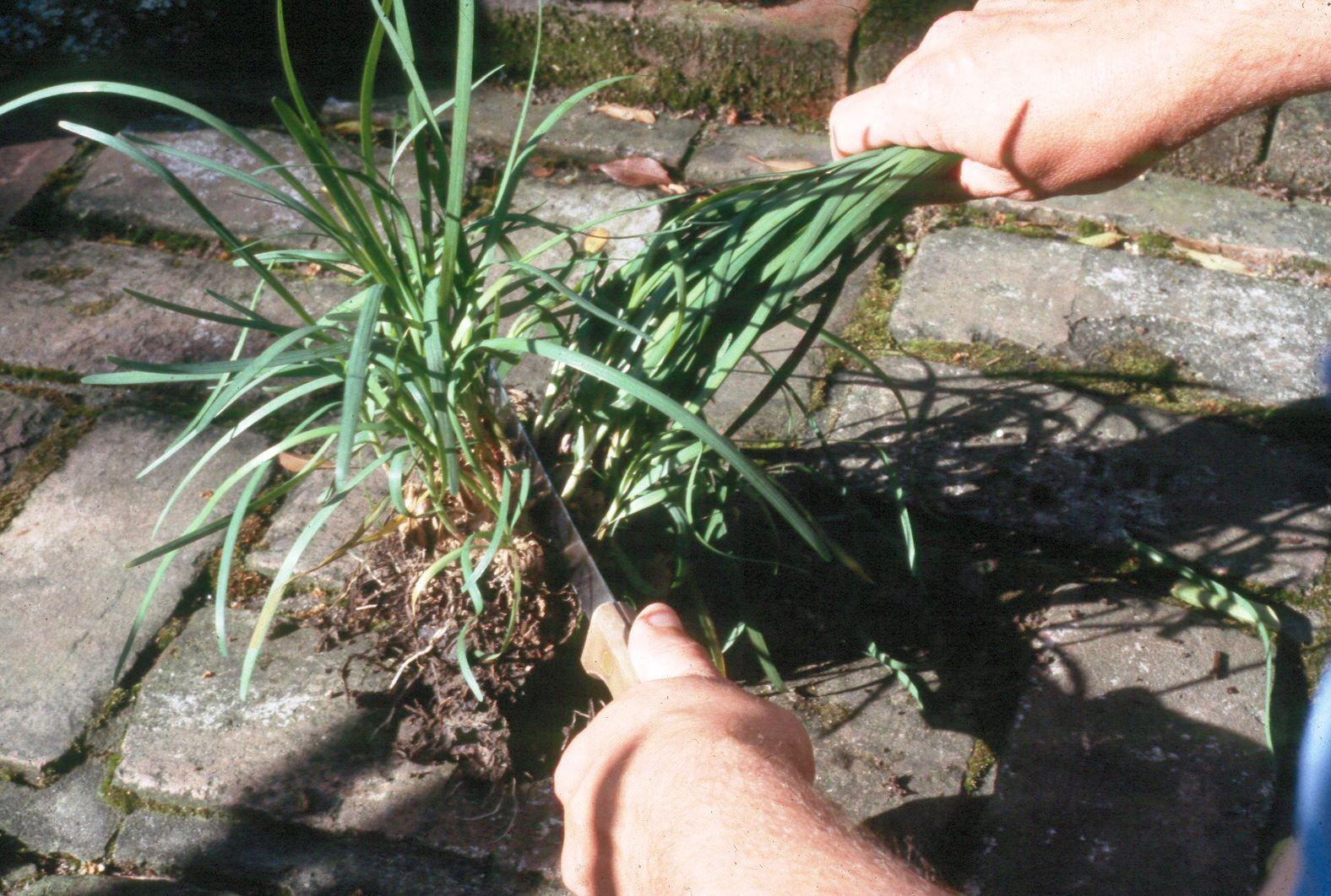 Otoño e invierno Cuidado de las plantas perennes | Egan Gardens