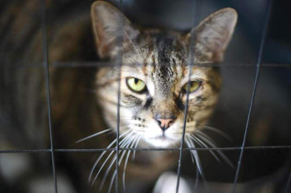 Animal Rescue: High heat can harm pets' health _lowres