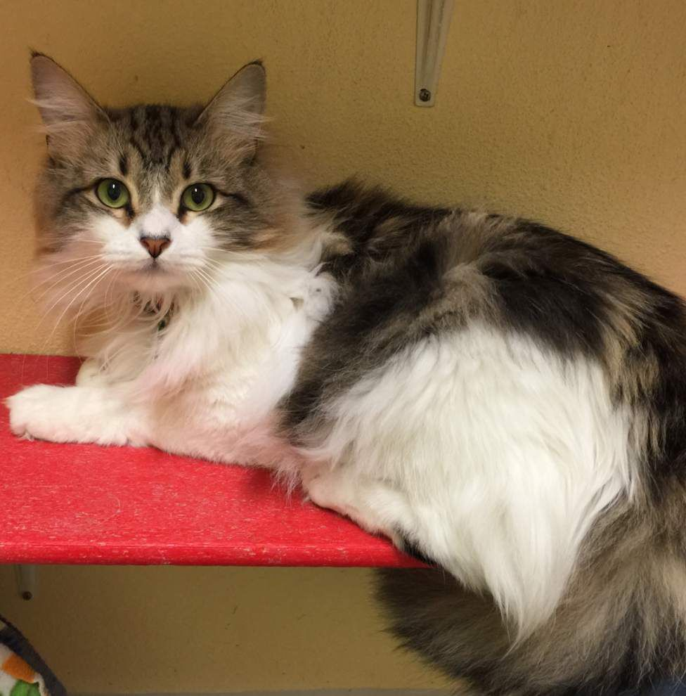 Mid City cats available for Feb. 4, 2016 _lowres