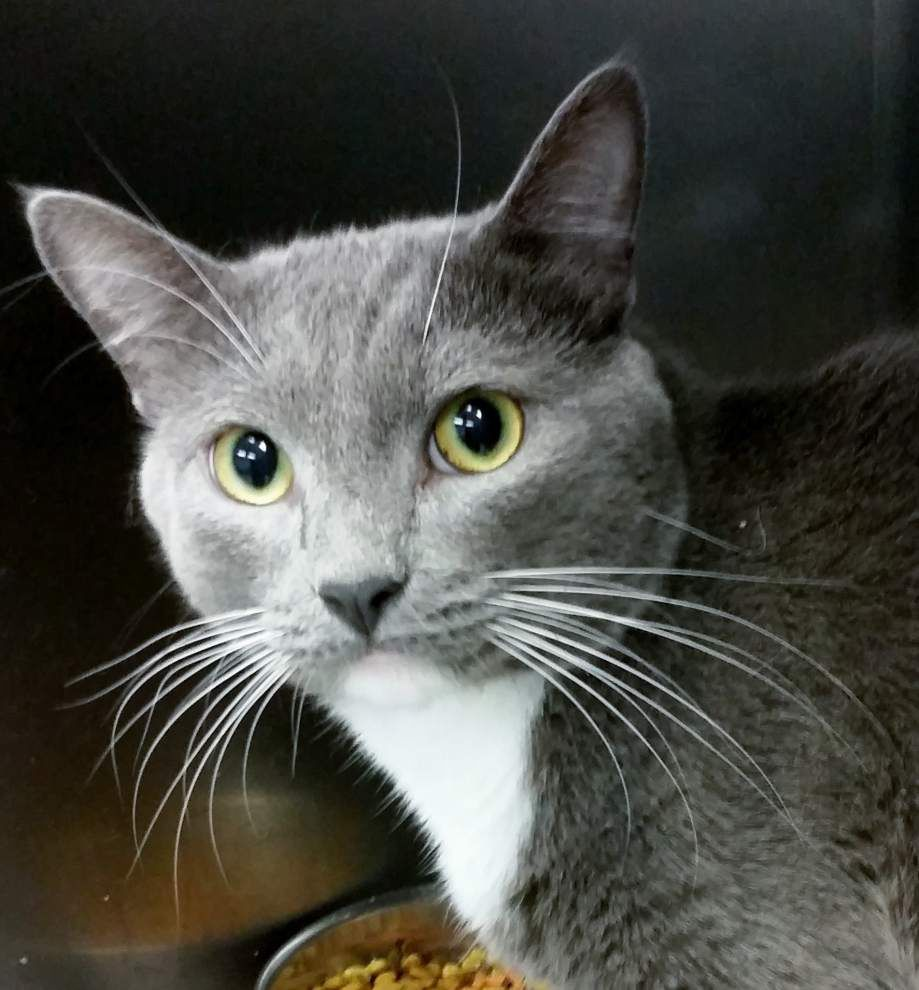 Ascension Parish pets available for Sept. 4, 2014 _lowres