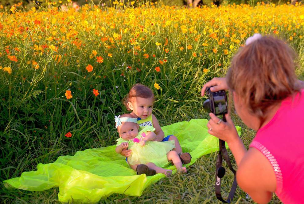 Wildflowers make parkgoers' excitement bloom _lowres