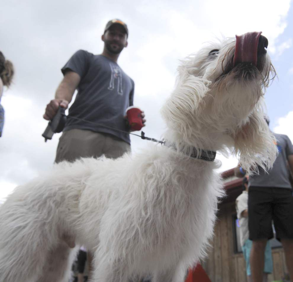 Photos: Barks & Brews - fundraiser for pet adoptions featuring specialty beer, live music, and dogs! _lowres