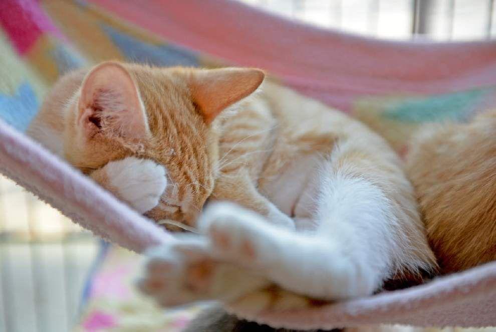 Cat rescue groups merge _lowres