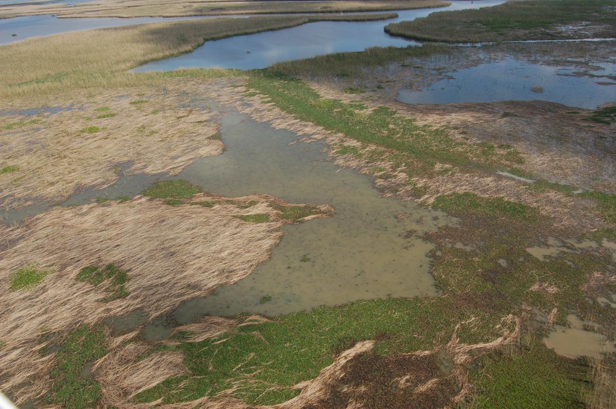 Roseau Cane aerial photo