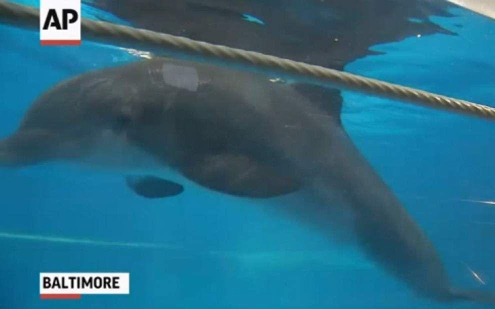 Under pressure, dolphin shows change _lowres