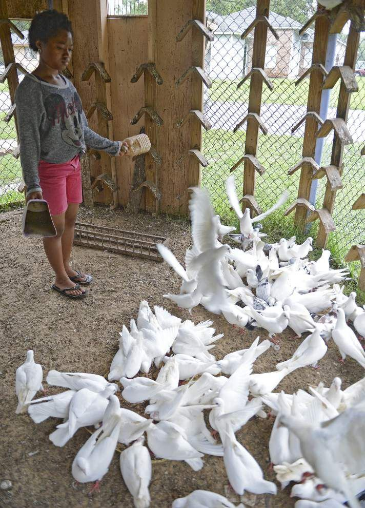 Baton Rouge teen cares for all animals, runs business with 200 homing pigeons _lowres
