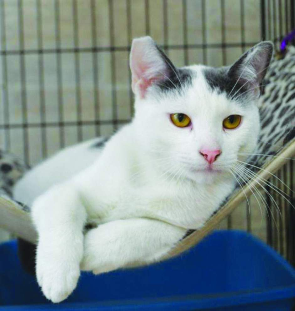 Animal Rescue: Older pets great candidates for adoption _lowres