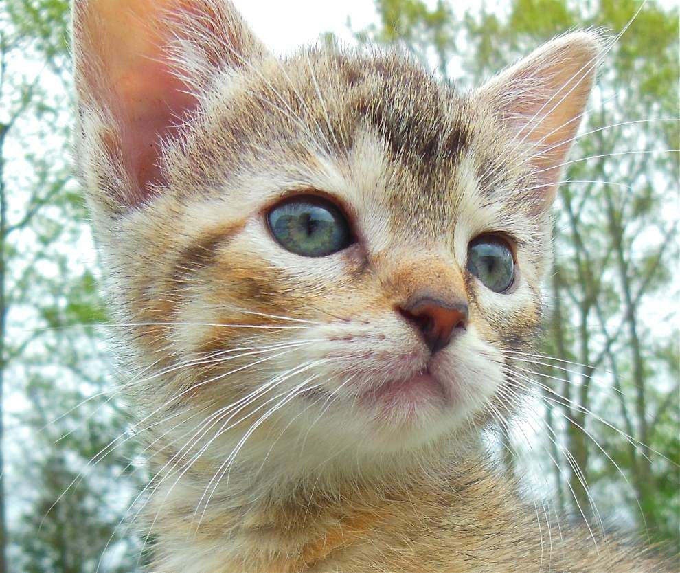 Available pets in West Feliciana for May 7, 2015 _lowres