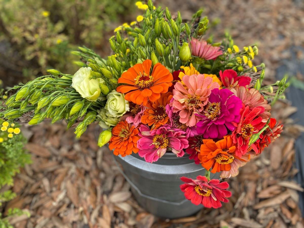 Harvest cut flowers in a bucket of water to help prevent wa.jpg