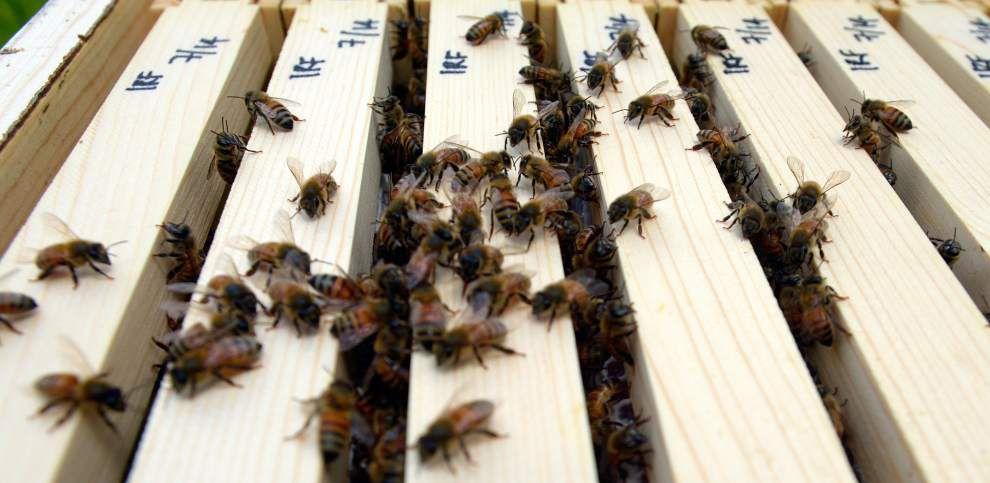 Audubon Insectarium bitten by beekeeping bug _lowres