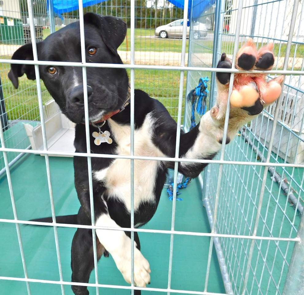 West Feliciana pets available for Nov. 26, 2015 _lowres