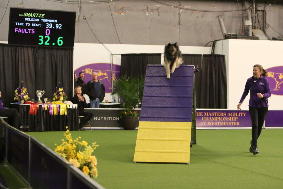The dog abides  South La. canine wins agility, obedience prizes at Westminster Kennel Club Dog Show _lowres