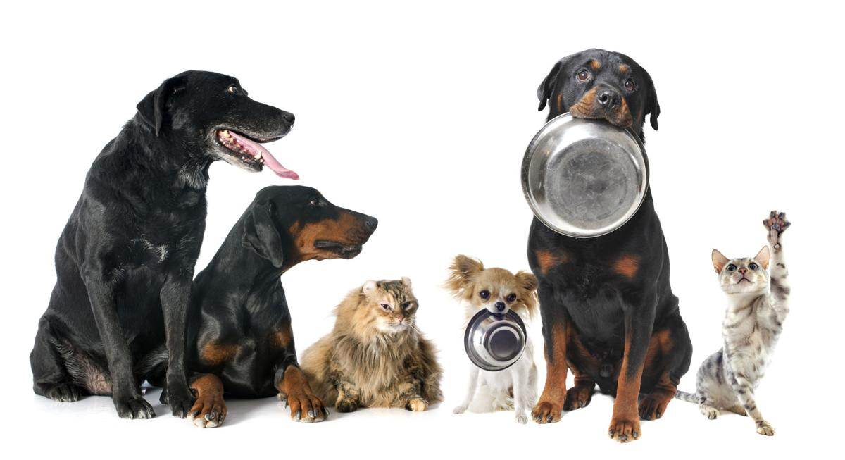 Dogs and Cats with Food Bowls
