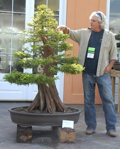 Bonsai Tree Baton Rouge Bonsai Tree