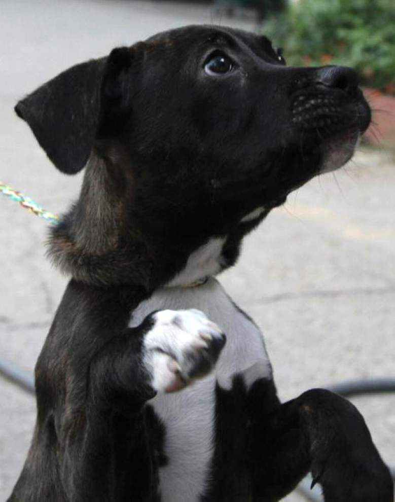Animal Rescue: A registered microchip can save the day when a pet is lost _lowres