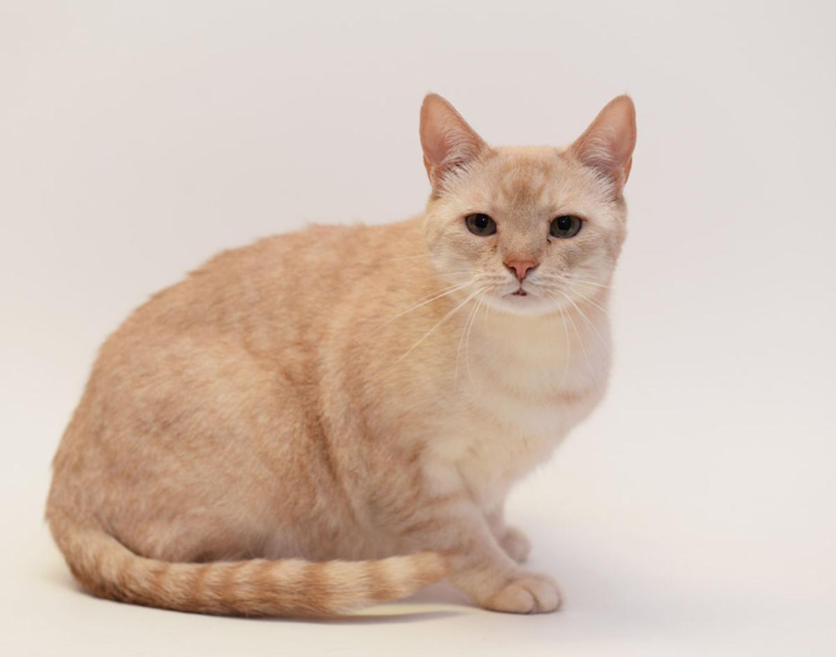 Cat Haven-Chumley.jpg