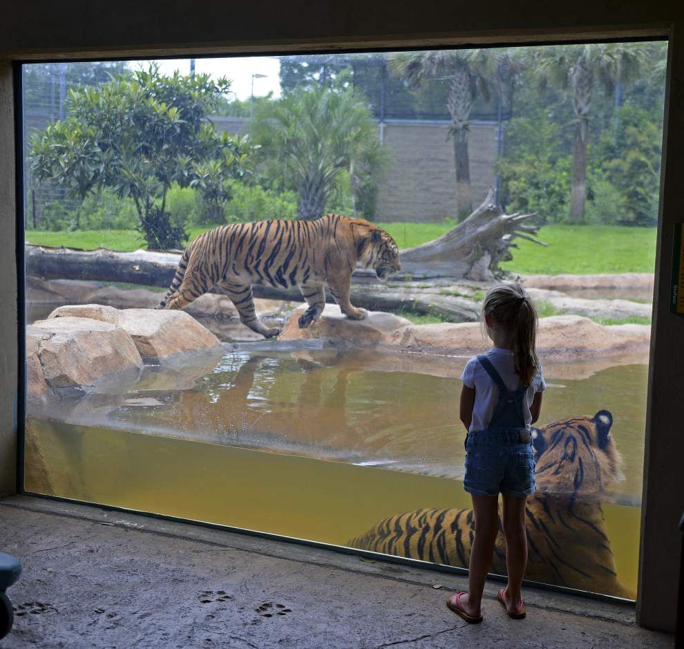 Study revives debate over relocating Baton Rouge Zoo, but politics could make it a tough sell _lowres