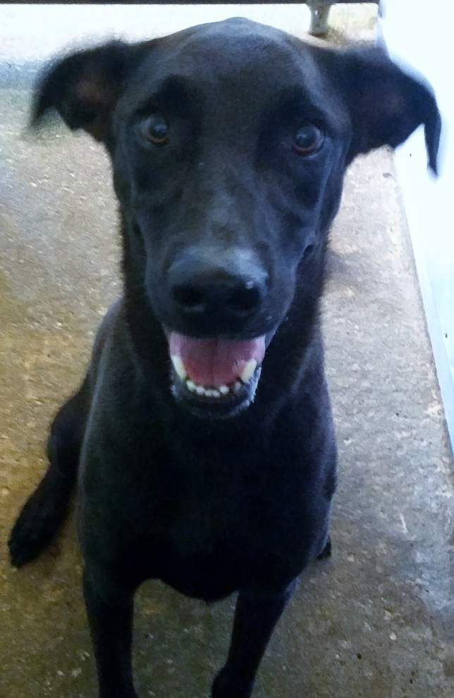 Ascension Parish pets available for Sept. 25, 2014 _lowres