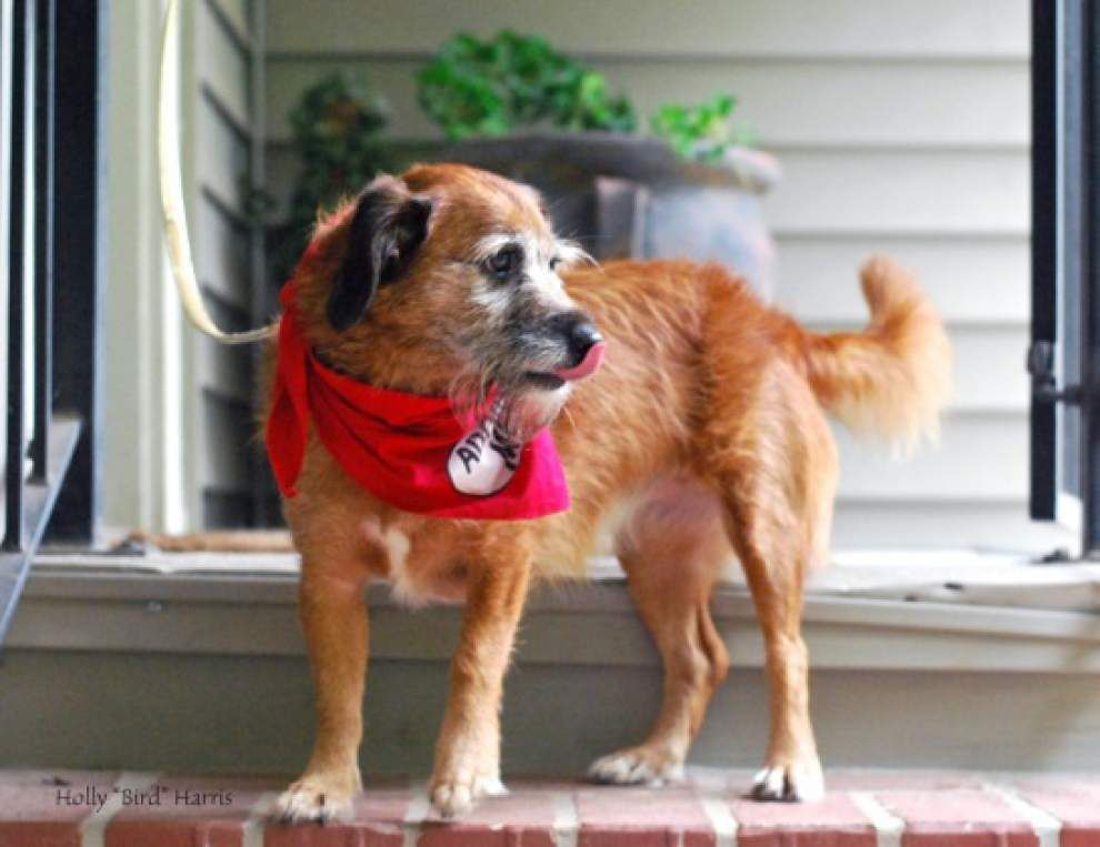 Southside pets available Nov. 6, 2014 _lowres