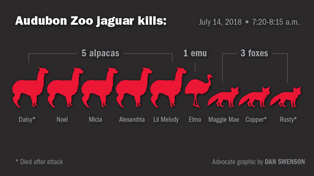 071718 Zoo Jaguar Kills