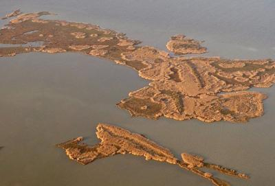 Wetland damage from roseau cane plague visible in satellite images