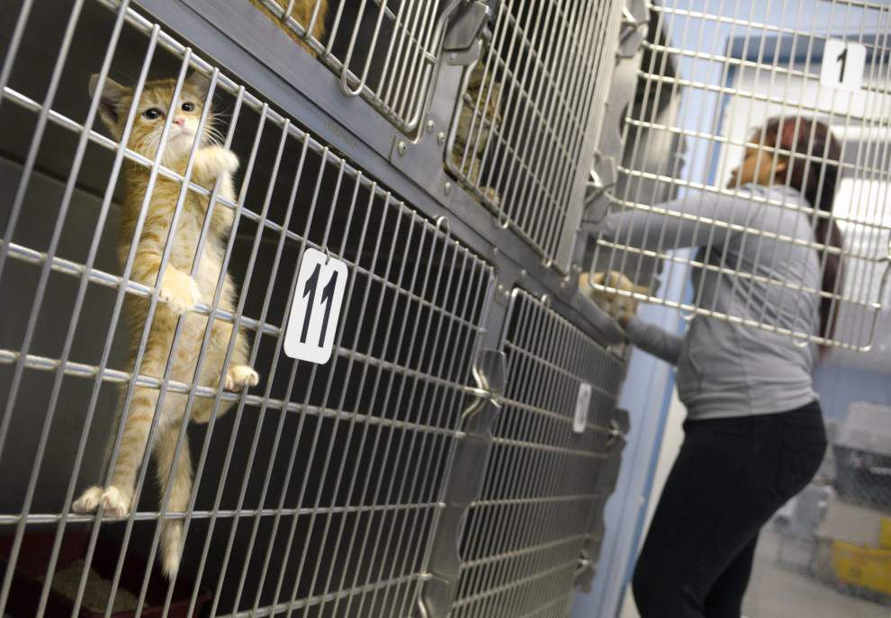 Banned animal rescue group lambasts Ascension Parish animal shelter conditions, demands access reinstatement _lowres