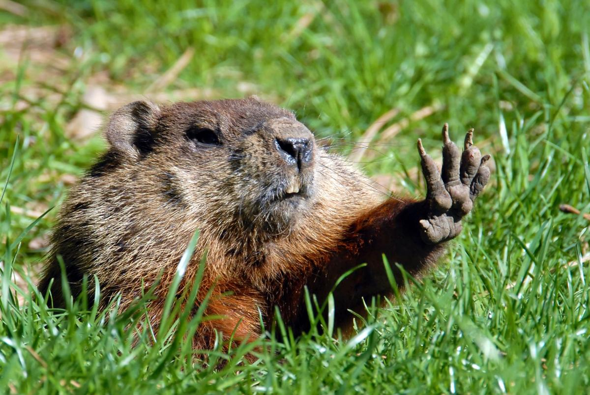 In the Louisiana legislature, it's always Groundhog Day_lowres