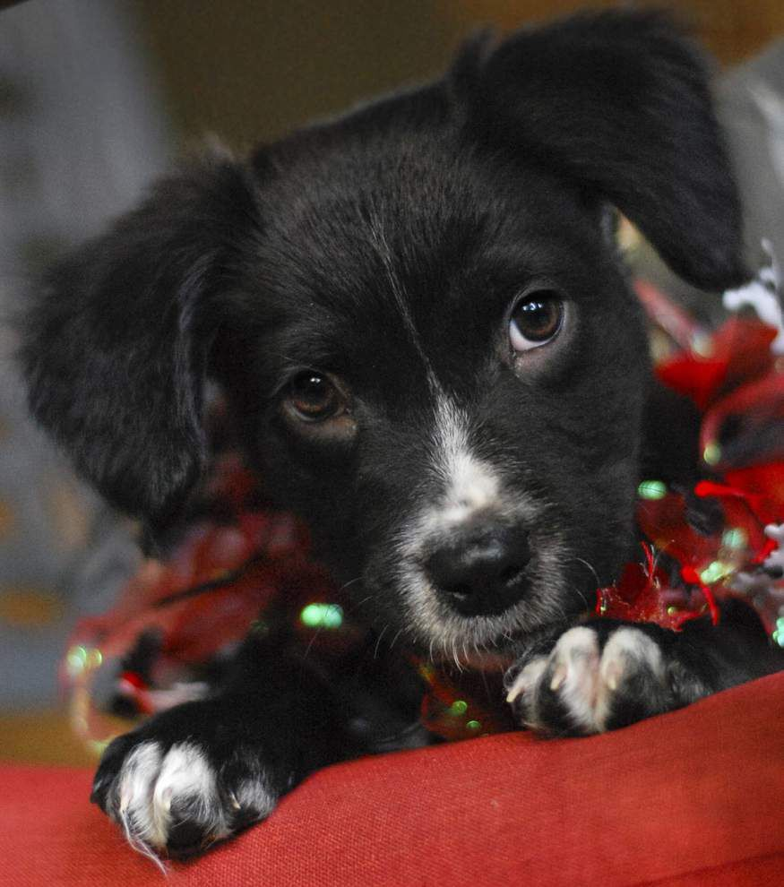 Southside dogs available for Nov. 26-Dec. 3, 2015 _lowres