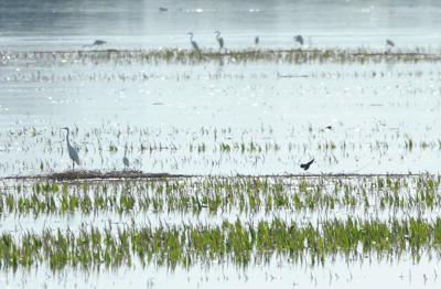 PHO Flood 01 AL.JPG