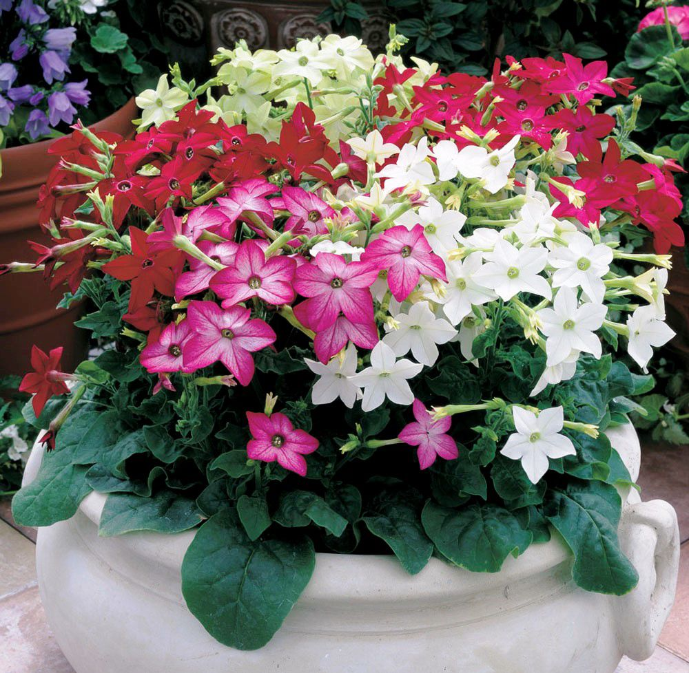 lsu agcenter try these plants for cool season color in the shade
