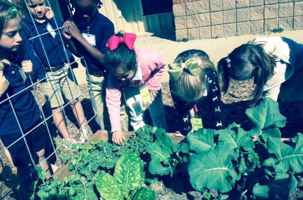 Bains Lower youth grow gardens, green thumbs _lowres