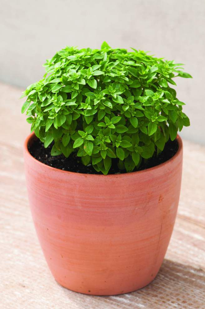 How to grow miniature fruits and veggies in containers _lowres